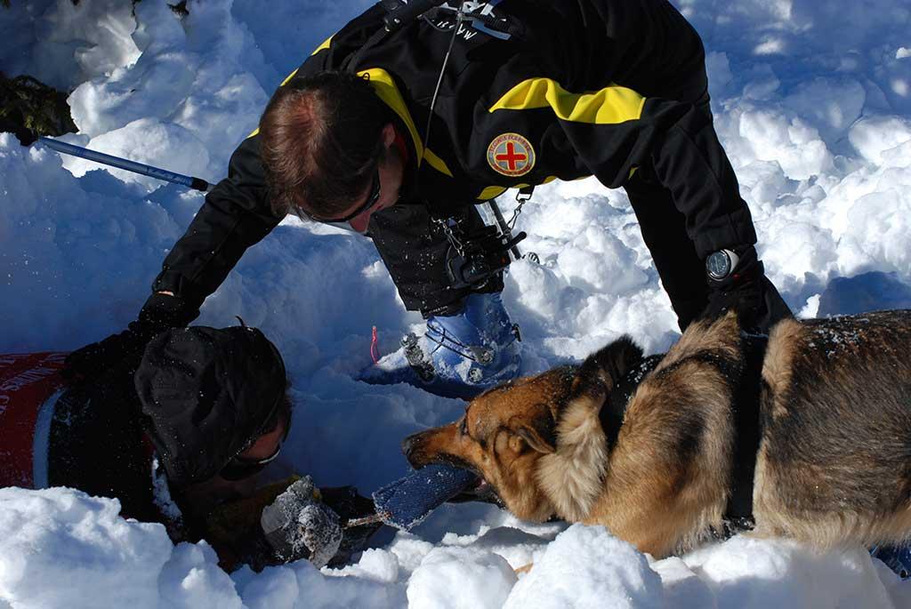 Rescue Avalanche German Shepherd